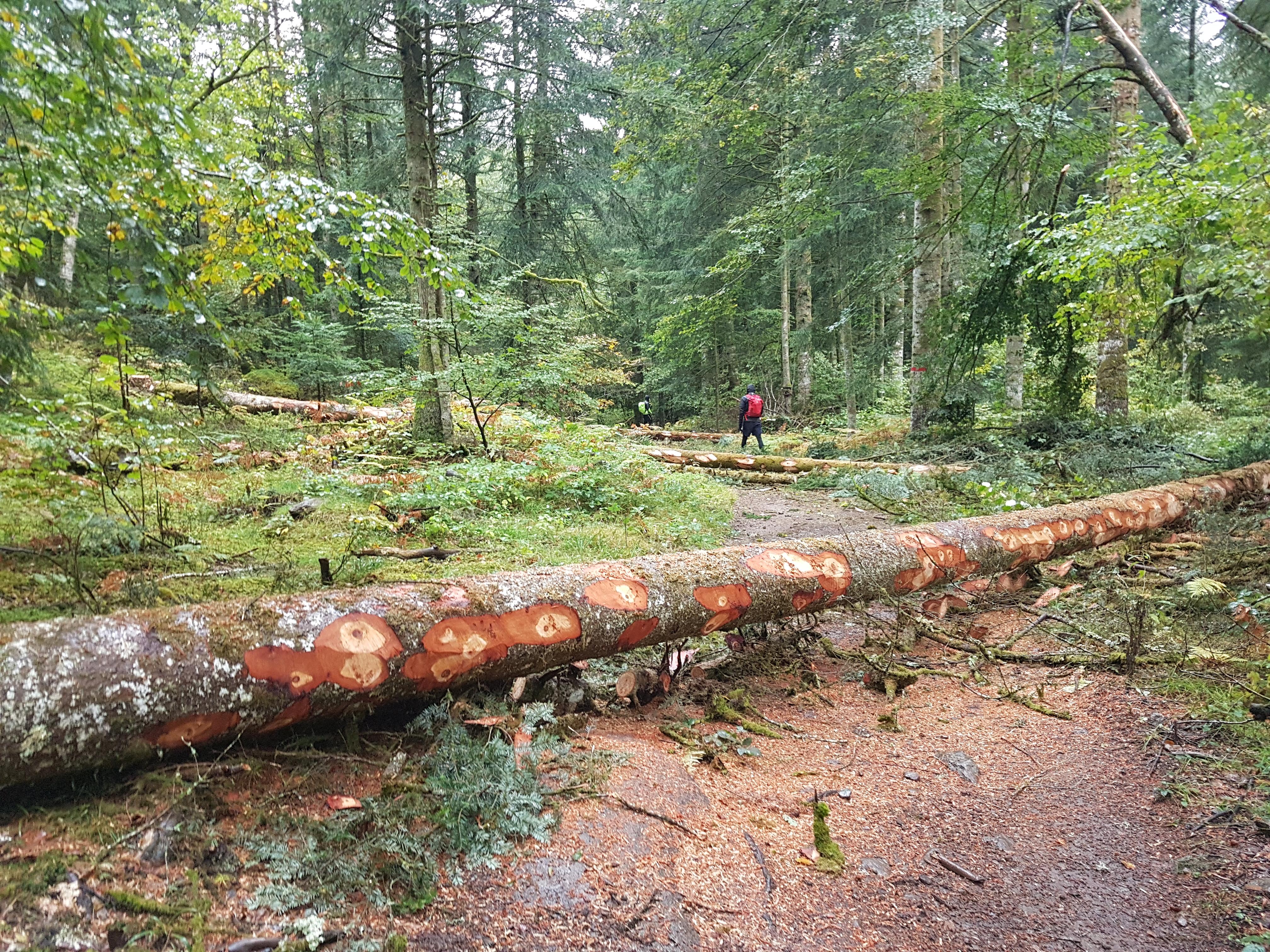 Chemin bloqué par des troncs d'arbres